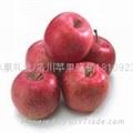 西安水果禮盒 3