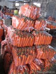 壽光胡蘿蔔
