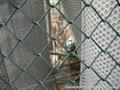球场围网_体育场护栏网_学校操场围栏网_安平厂家 2