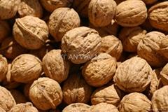 new organic walnuts