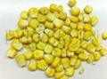 Freeze dried sweet corn whole
