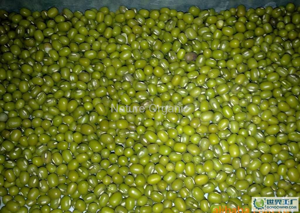 Organic green mung bean 1