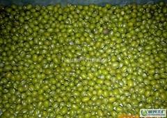 Organic green mung bean