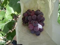fresh Chinese grape