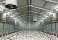 Steel Structure Poultry House(PH-1)