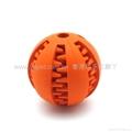 洁齿圆球 1
