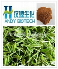 Green Tea Extract (Polyphenol 40%,Catechins 25%,EGCG 8%)