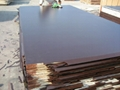 Chinese Film faced plywood & marine plywood  3