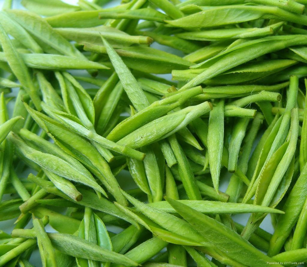 Supply Green Tea Powder Extract  1