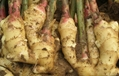 Supply Ginger Powder Extract