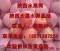 陝西冷庫紅富士蘋果