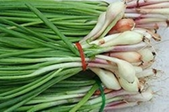Green Onion For Sell
