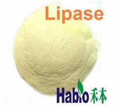 Feed Food Industry Lipase