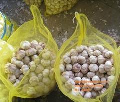 Vietnam garlic for sell