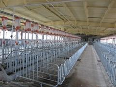 猪场自动化供料系统