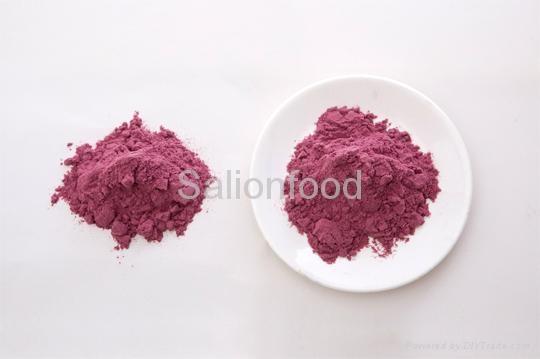 Blue berry powder 1