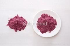 Blue berry powder