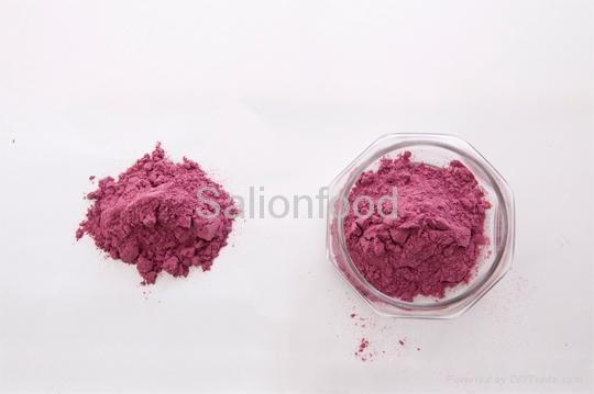 Blue berry powder 3