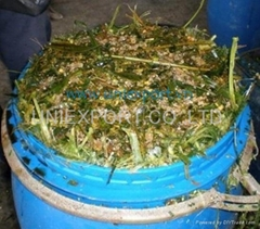 Corn sialge for animal bedding