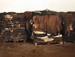 Wet salted cow hides 3