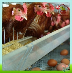 Layer Chicken Cage Poultry House