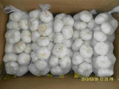 2013 new fresh garlic