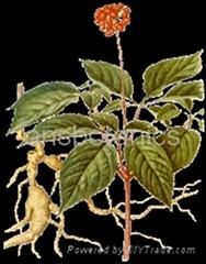 Ginseng Panax Extract