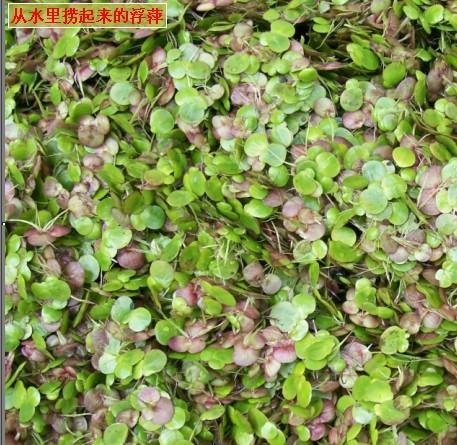 浮萍(中国 江西省 生产商)