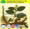 giant knotweed extract powder price