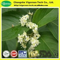 Tripterygium wilfordii extract/lei gong
