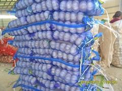 2013 China new crop pure white fresh garlic 4.5cm