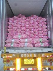 cold garlic from China