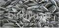 sunflower seeds 5009 2