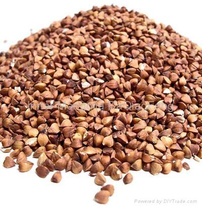 Roasted buckwheat groat 1