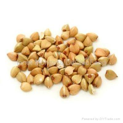 Roasted buckwheat groat 2