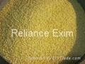 Indian Millet 1