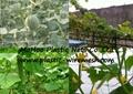 climbing plant support net&mesh pea&bean net&mesh  flower net&mesh(factory) 3