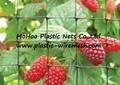 BOP anti bird net&mesh fruit&garden protect net&mesh anti bird net&mesh(factory) 3