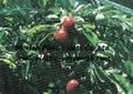 BOP anti bird net&mesh fruit&garden protect net&mesh anti bird net&mesh(factory) 4