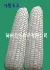 速凍白糯玉米