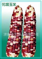 速凍花糯玉米