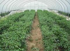 壽光蔬菜大棚建設