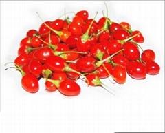 Dried Goji Berry Berries
