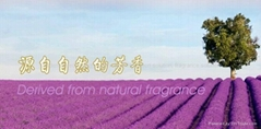Botanical extract and fragrance for chemical daily use