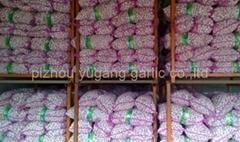 熱銷中國大蒜