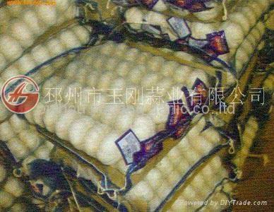 HOT SALE CHINESE GARLIC 3