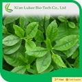 Samples free Panax Ginseng Root Extract