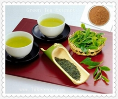 100% Pure Natural Polyphenols Green Tea Extract