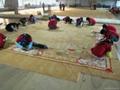 国产羊毛地毯