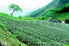 安溪雙洋茶葉生產基地
